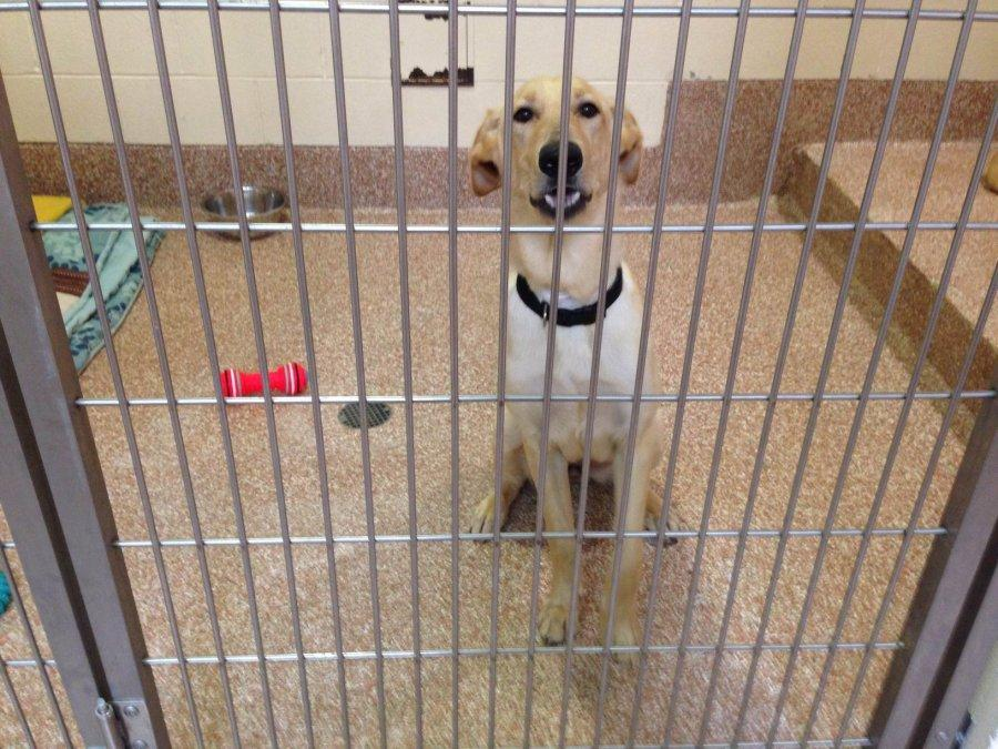 Family pets: Adopt don't shop